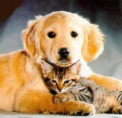 Se instala un proyecto sobre protección y tenencia de animales domésticos